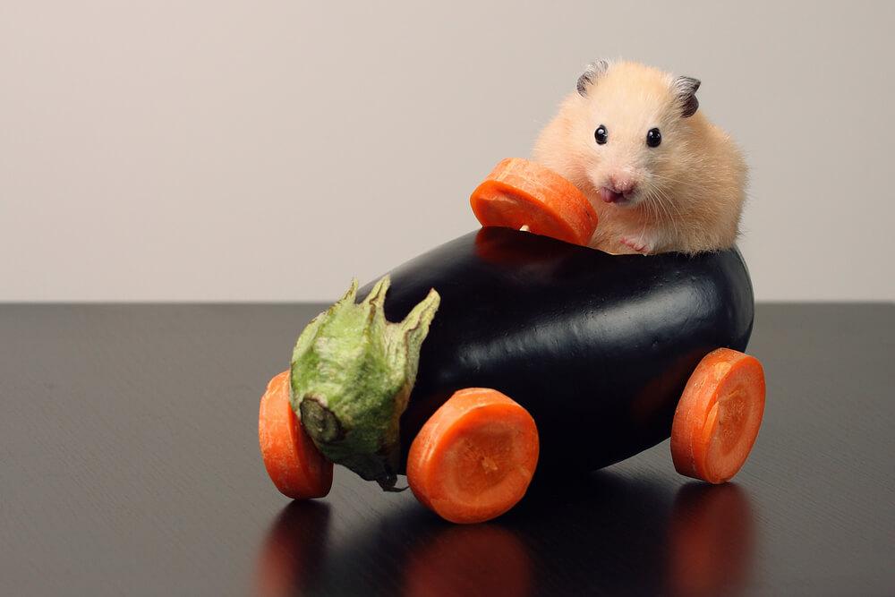 hamster için zararlı besin